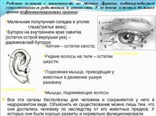 Родство человека с животными, по мнению Дарвина, подтверждается существование