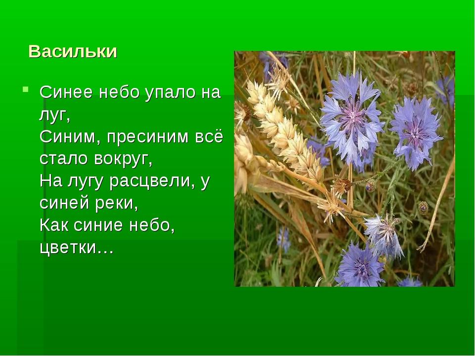 Васильки Синее небо упало на луг, Синим, пресиним всё стало вокруг, На лугу р...