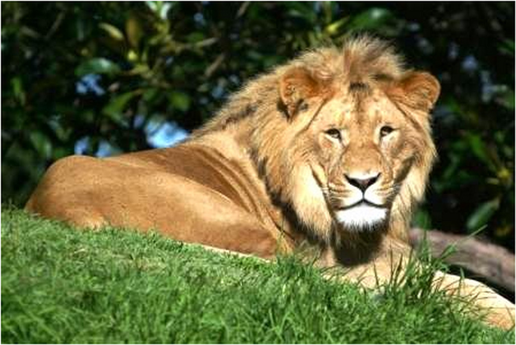 http://www.e-celebrities.org/wp-content/uploads/2011/03/african-lion-pictures1.jpg