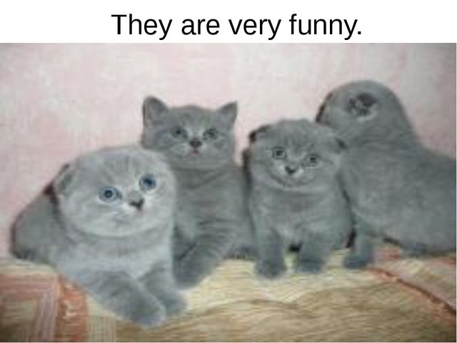 They are very funny.