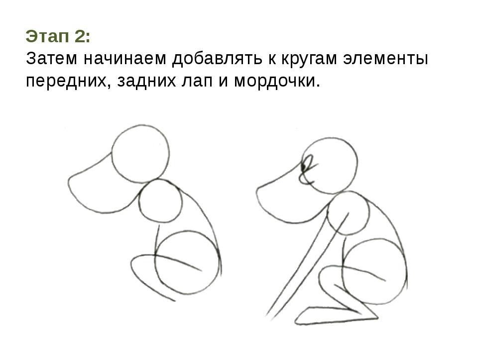 Этап 2: Затем начинаем добавлять к кругам элементы передних, задних лап и мор...