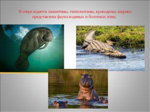 В озере водятсяламантины,гиппопотамы,крокодилы; широко представлена фауна