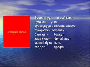 Улаан ном Боро галуун- серый гусь нугаһан- утка хун шубуун – лебедь-кликун то