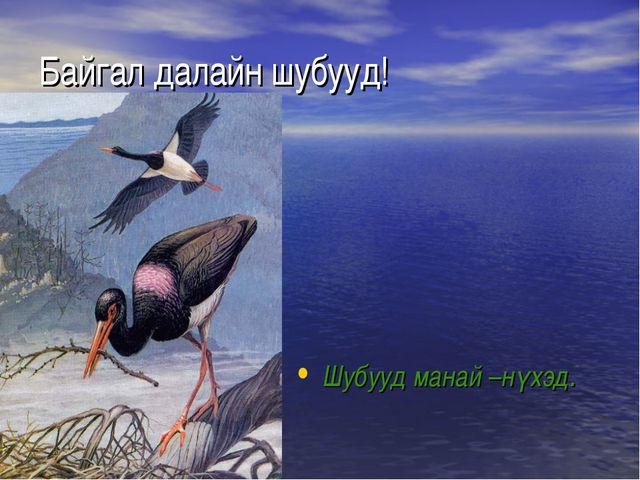 Байгал далайн шубууд! Шубууд манай –нүхэд.