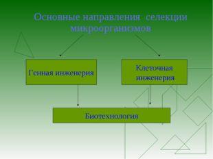 Основные направления селекции микроорганизмов Генная инженерия Клеточная инже