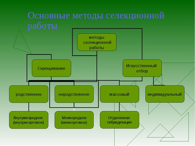 Основные методы селекционной работы