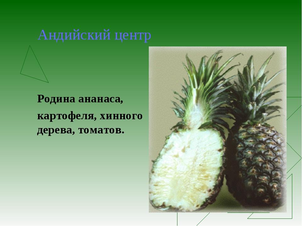 Андийский центр Родина ананаса, картофеля, хинного дерева, томатов.