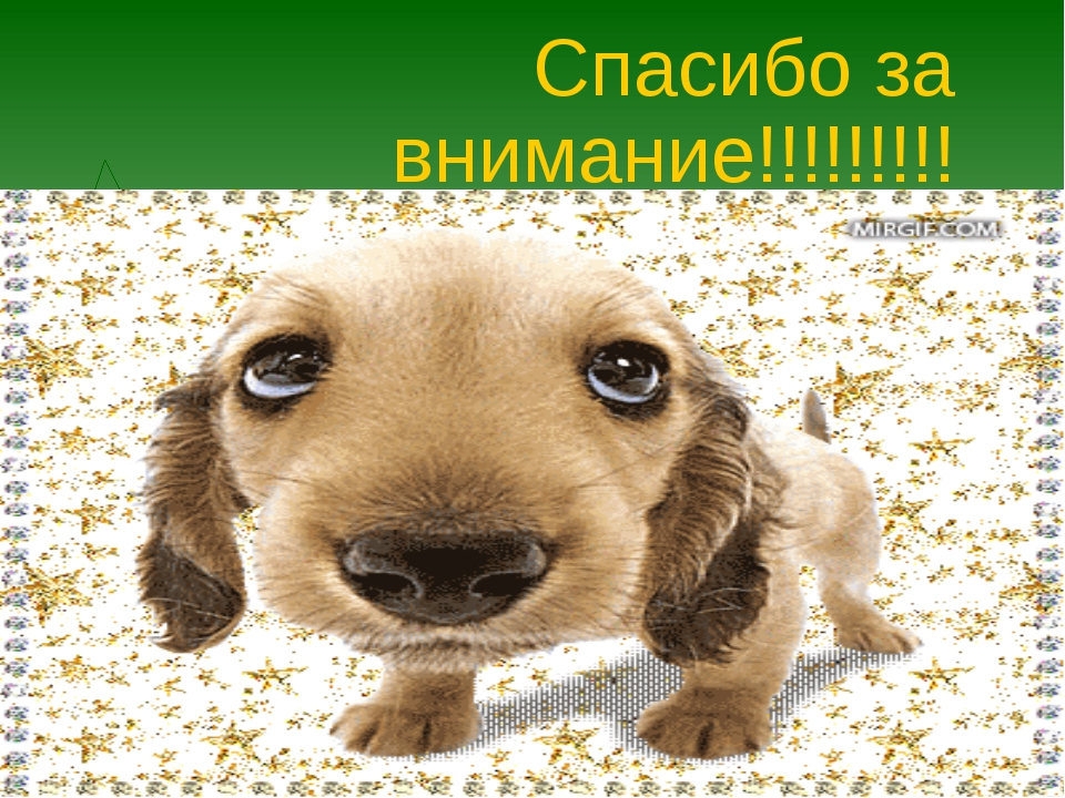 Спасибо за внимание!!!!!!!!!