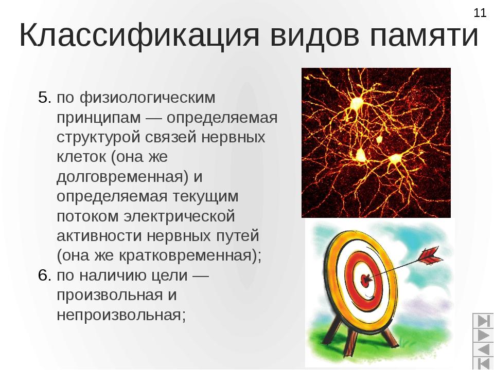 Классификация видов памяти по физиологическим принципам — определяемая структ...