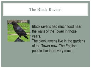 The Black Ravens Black ravens had much food near the walls of the Tower in th