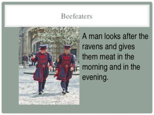 Beefeaters A man looks after the ravens and gives them meat in the morning an