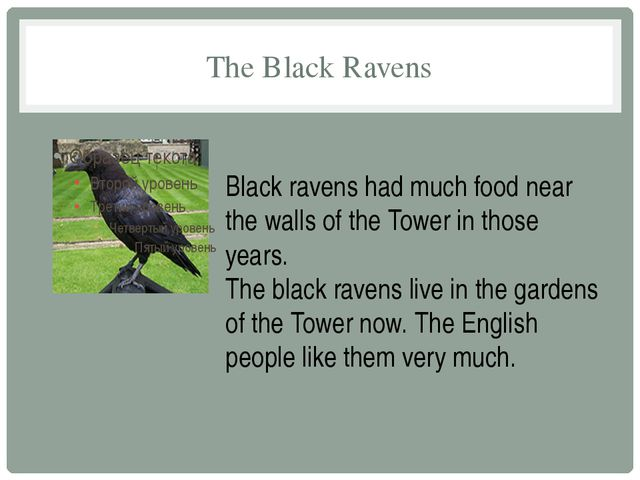 The Black Ravens Black ravens had much food near the walls of the Tower in th...