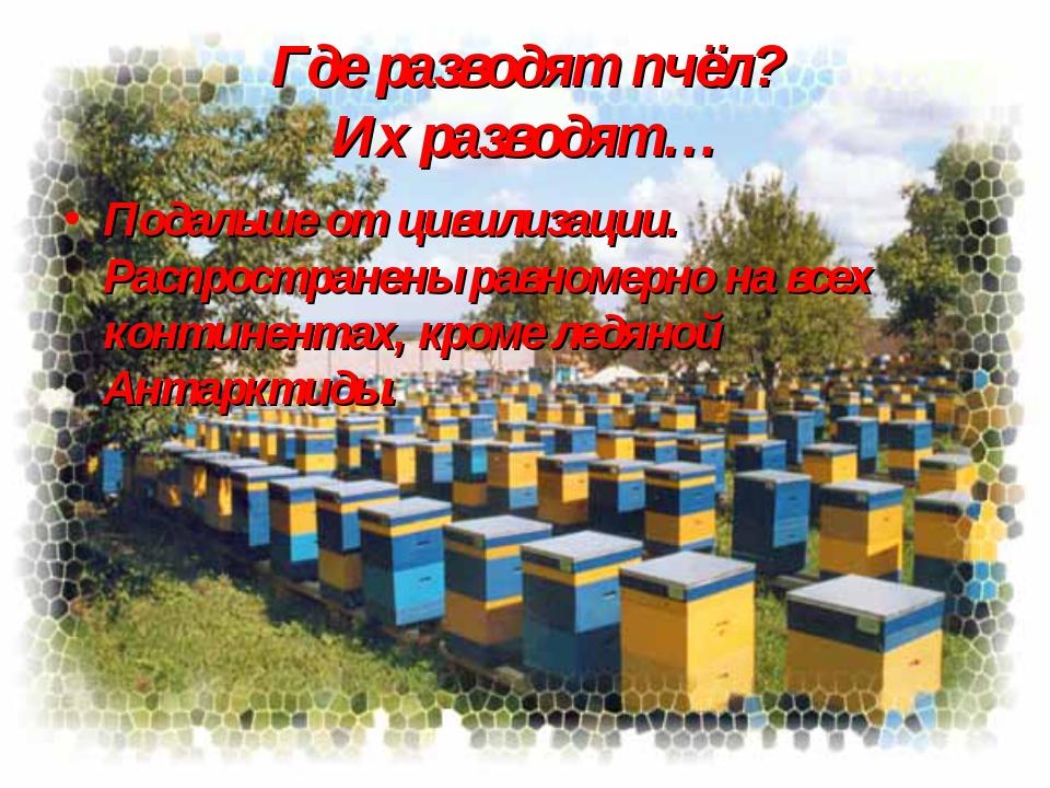 Где разводят пчёл? Их разводят… Подальше от цивилизации. Распространены равно...