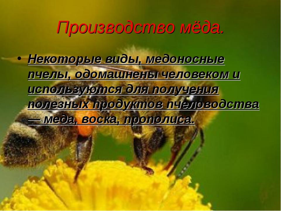 Производство мёда. Некоторые виды, медоносные пчелы, одомашнены человеком и и...