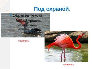 Под охраной. Пеликаны Фламинго