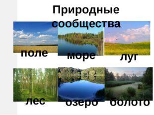 Природные сообщества поле море луг лес озеро болото