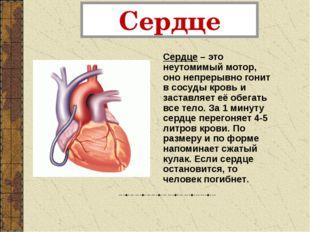 Сердце Сердце – это неутомимый мотор, оно непрерывно гонит в сосуды кровь и з