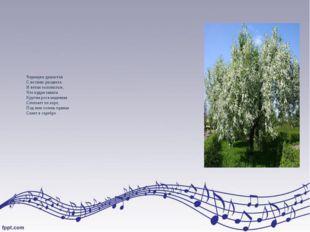 Черемуха душистая С весною расцвела. И ветки золотистые, Что кудри завила. Кр