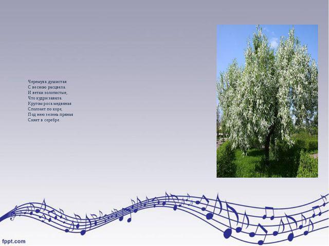 Черемуха душистая С весною расцвела. И ветки золотистые, Что кудри завила. Кр...