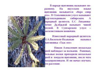 В народе щитовник называют по-разному. На якутском языке щитовник называется