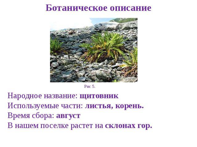 Ботаническое описание Народное название: щитовник Используемые части: листья,...