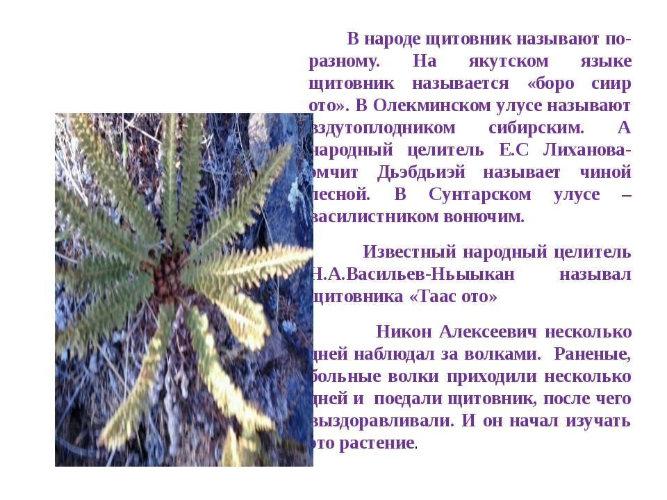 В народе щитовник называют по-разному. На якутском языке щитовник называется...