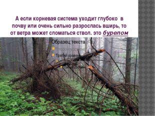 А если корневая система уходит глубоко в почву или очень сильно разрослась вш