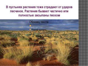 В пустынях растения тоже страдают от ударов песчинок. Растения бывают частичн