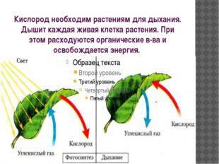 Кислород необходим растениям для дыхания. Дышит каждая живая клетка растения.