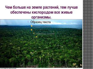 Чем больше на земле растений, тем лучше обеспечены кислородом все живые орган