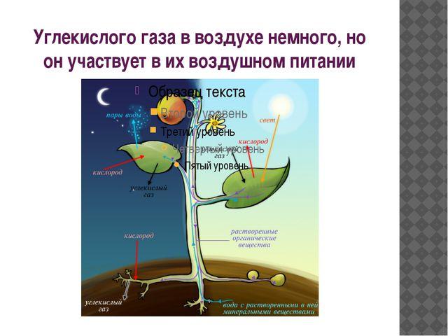 Углекислого газа в воздухе немного, но он участвует в их воздушном питании