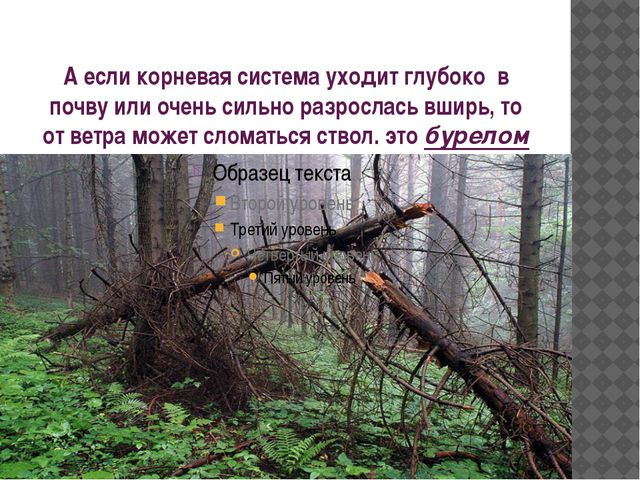 А если корневая система уходит глубоко в почву или очень сильно разрослась вш...