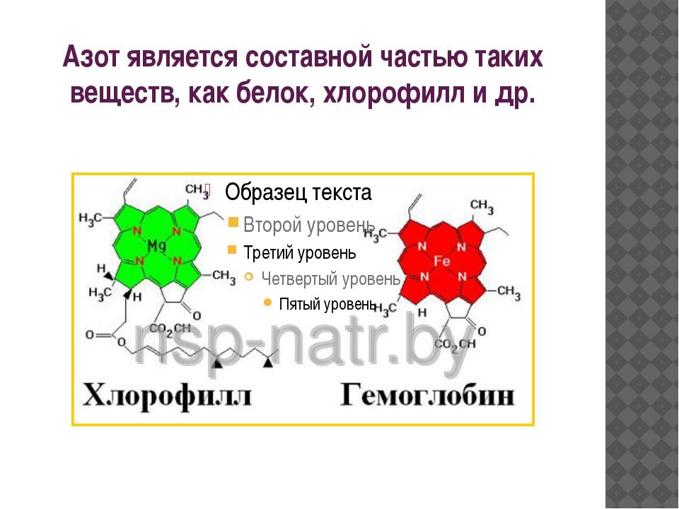 Азот является составной частью таких веществ, как белок, хлорофилл и др.
