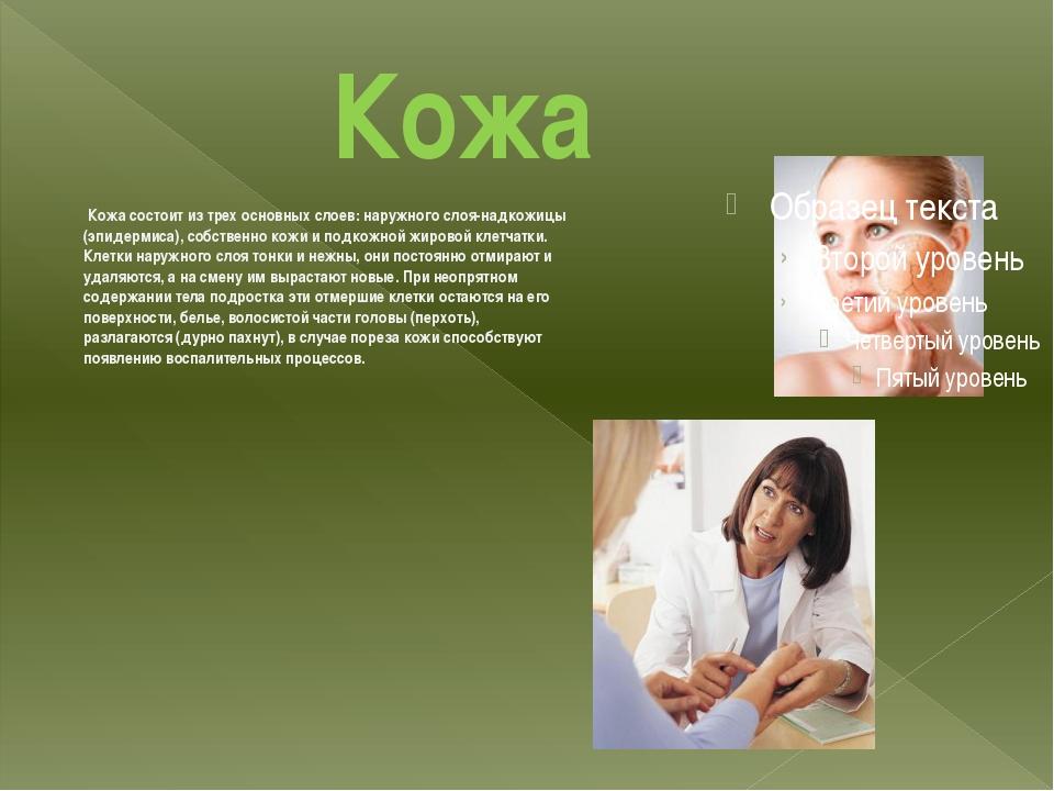Кожа Кожа состоит из трех основных слоев: наружного слоя-надкожицы (эпидерми...