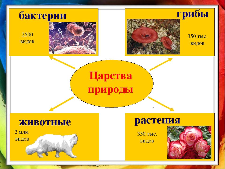 Царства природы бактерии животные растения грибы 2500 видов 350 тыс. видов 2...
