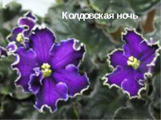 Колдовская ночь