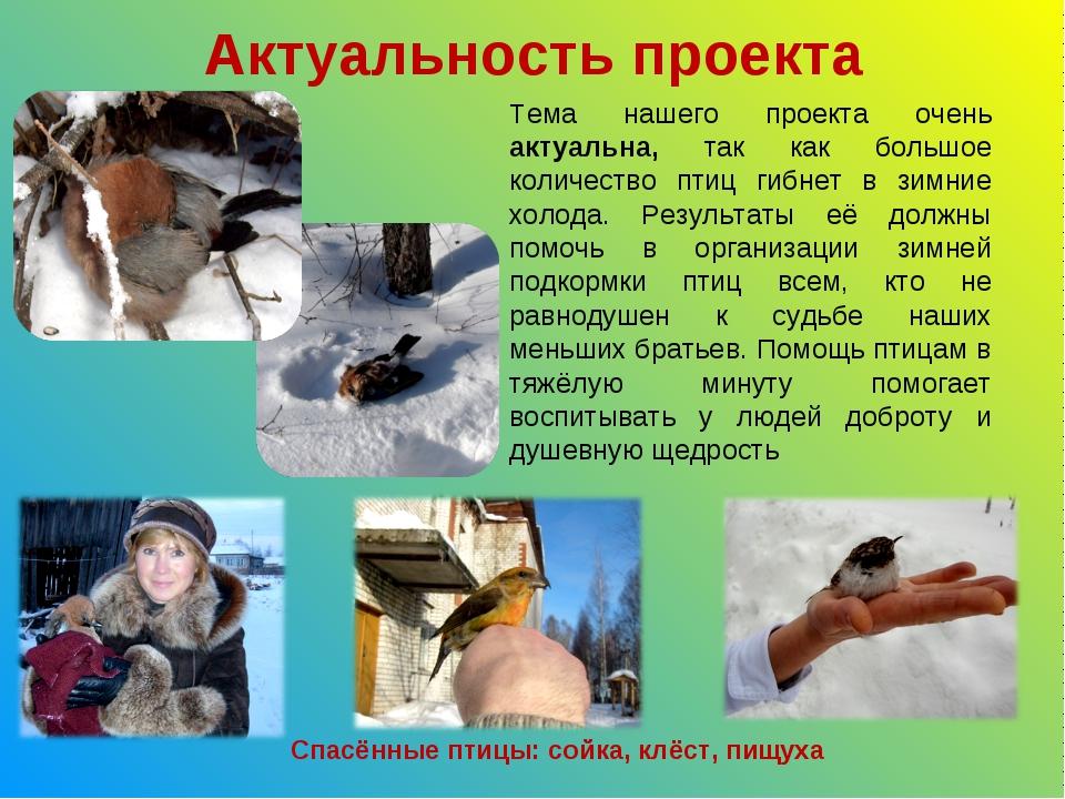 Актуальность проекта Спасённые птицы: сойка, клёст, пищуха Тема нашего проект...