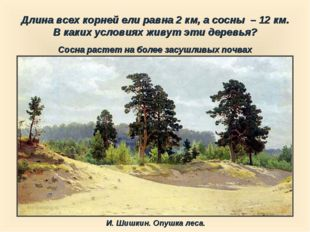 Длина всех корней ели равна 2 км, а сосны – 12 км. В каких условиях живут эт