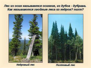 Лес из осин называется осинник, из дубов - дубрава. Как называются хвойные ле