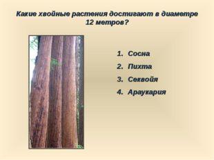 Какие хвойные растения достигают в диаметре 12 метров? Сосна Пихта Секвойя Ар