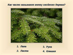 Как часто называют ветку хвойного дерева? Лапа Ласта 3. Рука 4. Клешня
