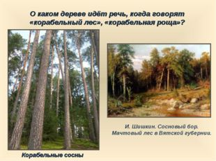 О каком дереве идёт речь, когда говорят «корабельный лес», «корабельная роща»