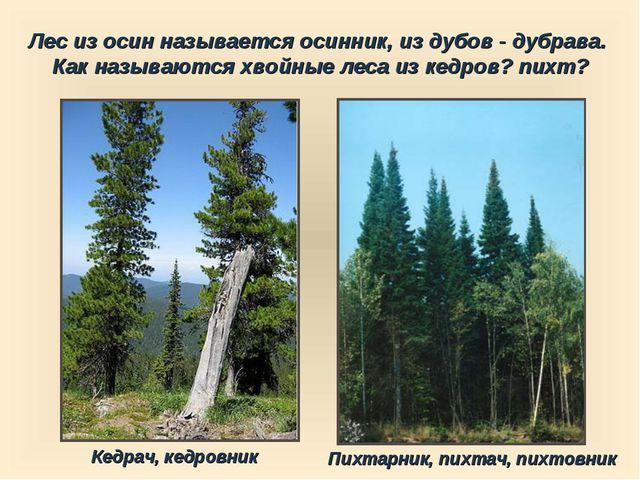 Лес из осин называется осинник, из дубов - дубрава. Как называются хвойные ле...