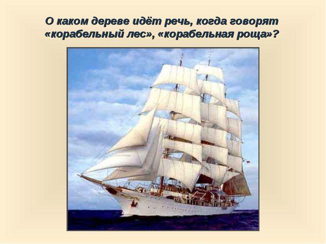 О каком дереве идёт речь, когда говорят «корабельный лес», «корабельная роща»?