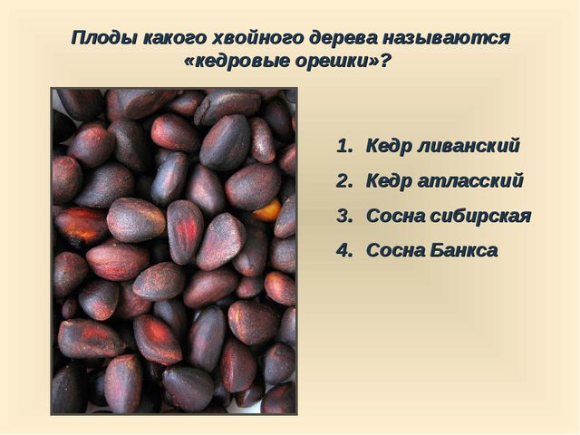 Плоды какого хвойного дерева называются «кедровые орешки»? Кедр ливанский Кед...
