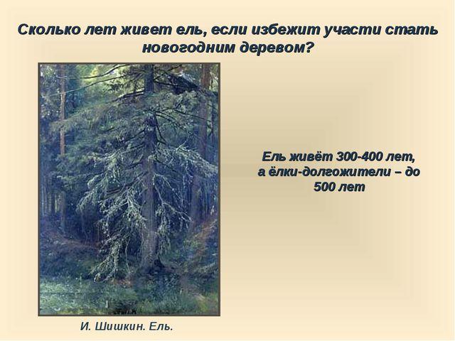 Сколько лет живет ель, если избежит участи стать новогодним деревом? Ель живё...