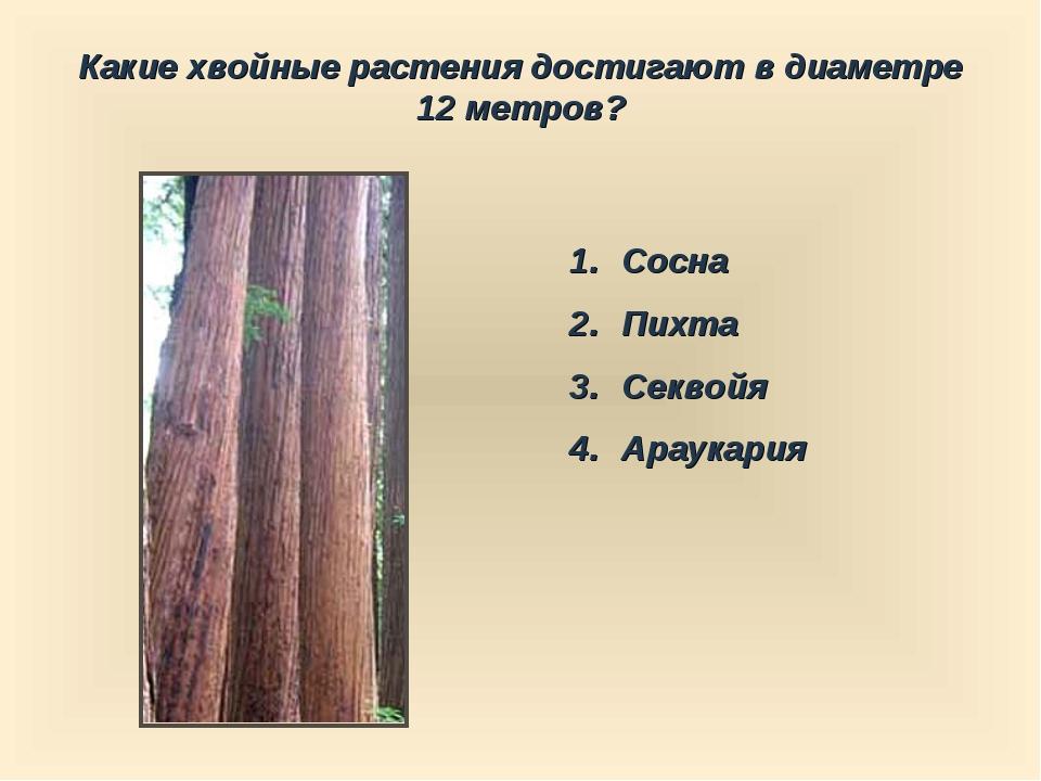 Какие хвойные растения достигают в диаметре 12 метров? Сосна Пихта Секвойя Ар...