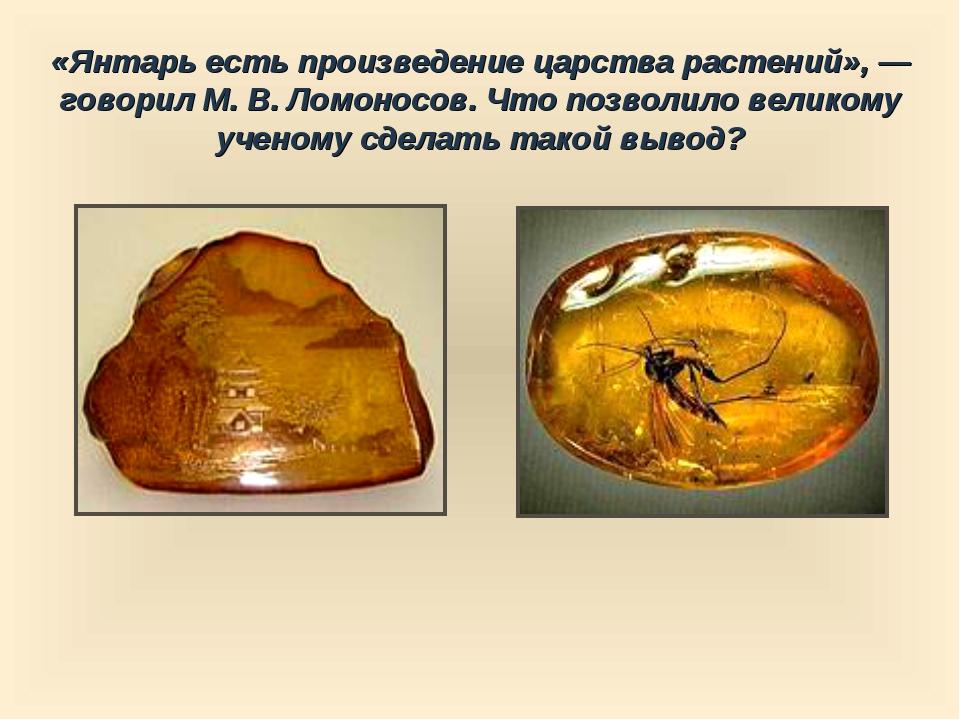 «Янтарь есть произведение царства растений», — говорил М. В. Ломоносов. Что п...