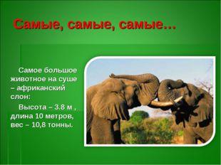 Самые, самые, самые… Самое большое животное на суше – африканский слон: Высот