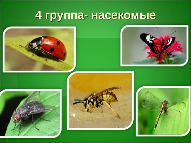 4 группа- насекомые